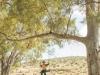 FlindersRanges011116-365