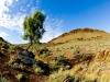 almertabluffandlonetree